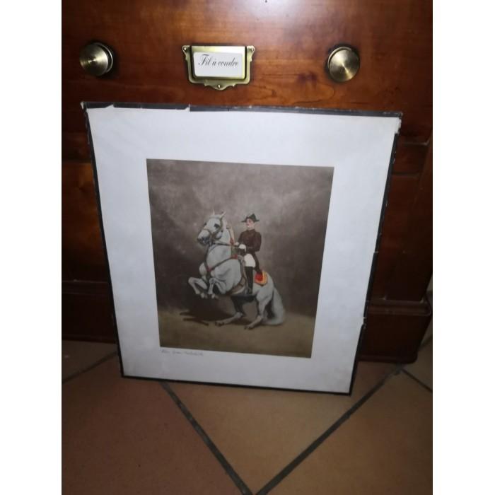 Gravure de la Wein Spain Reitschule, école d'équitation Espagnole représentant La Levade